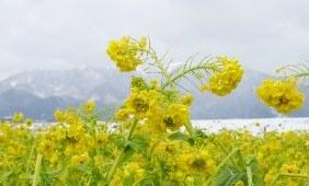 びわ湖の写真